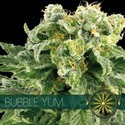Bubble Yum (Vision Seeds) feminizada