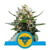 Royal Medic (Royal Queen Seeds) feminizada