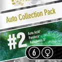 Auto Collection Pack 2 (Paradise Seeds) feminizada