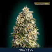 Heavy Bud (Advanced Seeds) feminizada