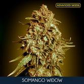 Somango Widow (Advanced Seeds) feminizada