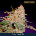 Black Diesel (Advanced Seeds) feminizada