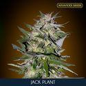 Jack Plant (Advanced Seeds) feminizada