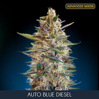 Auto Blue Diesel (Advanced Seeds) feminizada