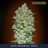 Auto Bio Diesel Mass (Advanced Seeds) feminizada