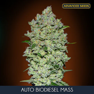 Auto Bio Diesel Mass (Advanced Seeds) feminizada