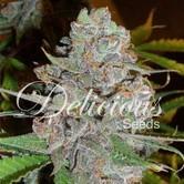 La Diva (Delicious Seeds) feminizada