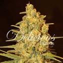 Critical Sensi Star (Delicious Seeds) feminizada