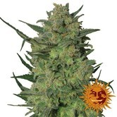 LSD (Barney's Farm) feminizada