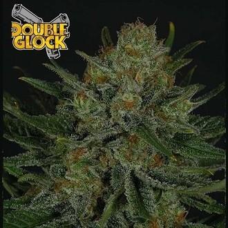 Double Glock (Ripper Seeds) feminizada