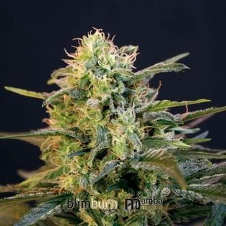 Mamba Negra (Blimburn Seeds) feminizada