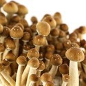 Kit 'Hawaiian' 100% Mycelium  (Supa Gro)