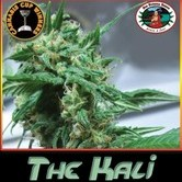 The Kali (Big Buddha Seeds) feminizada