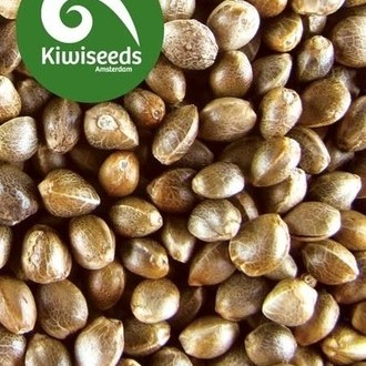 Outdoor Mix (Kiwi Seeds) feminizada