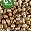 Outdoor Mix (Kiwi Seeds) feminizada
