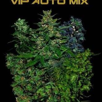 VIP Auto Mix (VIP Seeds) feminizada