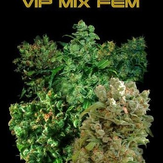 VIP Mix (VIP Seeds) feminizada