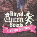 Camiseta Royal Queen Seeds 'City'