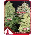 Collection 1 (Medical Seeds) feminizada