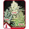Coleccíon 4 (Medical Seeds) feminizada