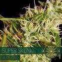 Super Skunk Autoflowering (Vision Seeds) feminizada