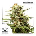 Auto White Widow (Dutch Passion) feminizada