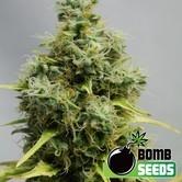 Big Bomb (Bomb Seeds) feminizada