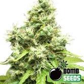 Medi Bomb 1 (Bomb Seeds) feminizada