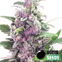 THC Bomb (Bomb Seeds) feminizada
