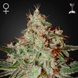 Lemon Skunk (Greenhouse Seeds) feminizada