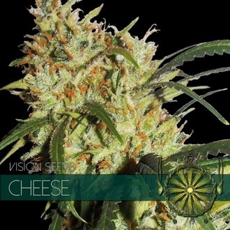 Cheese (Vision Seeds) feminizada