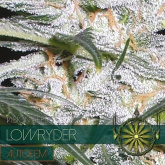 Lowryder (Vision Seeds) feminizada