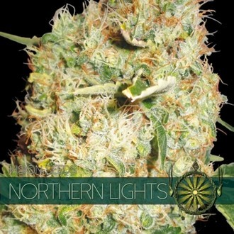 Northern Lights (Vision Seeds) feminizada