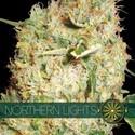 Northern Lights (Vision Seeds) feminizada