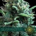 Silver Haze (Vision Seeds) feminizada
