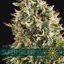 Super Skunk (Vision Seeds) feminizada