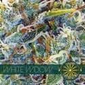 White Widow (Vision Seeds) feminizada
