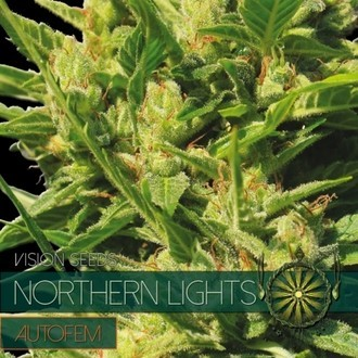 Northern Lights Autoflowering (Vision Seeds) feminizada