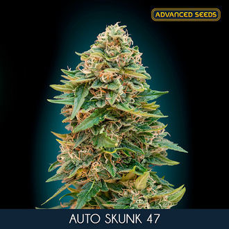 Auto Skunk 47 (Advanced Seeds) feminizada