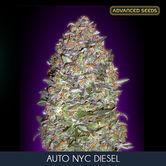 Auto NYC Diesel (Advanced Seeds) feminizada