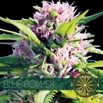 Blue Power (Vision Seeds) feminizada