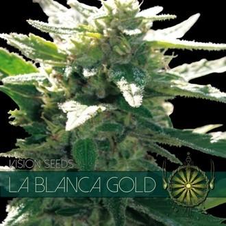La Blanca Gold (Vision Seeds) feminizada