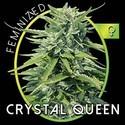 Crystal Queen (Vision Seeds) feminizada