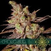 Choco Bud (Vision Seeds) feminizada