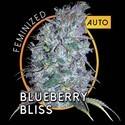 Blueberry Bliss Autoflowering (Vision Seeds) feminizada