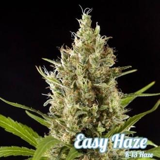 Easy Haze (Philosopher Seeds) feminizada