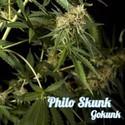 Philo Skunk (Philosopher Seeds) feminizada
