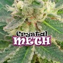 Crystal M.E.T.H. (Dr. Underground) feminizada