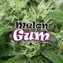 Melon Gum (Dr. Underground) feminizada