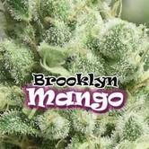 Brooklyn Mango (Dr. Underground) feminizada